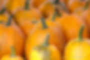 Pumpkins at Rose's Berry Farm
