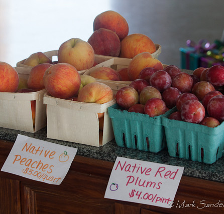 Native peaches and plums at Rose's Berry Farm