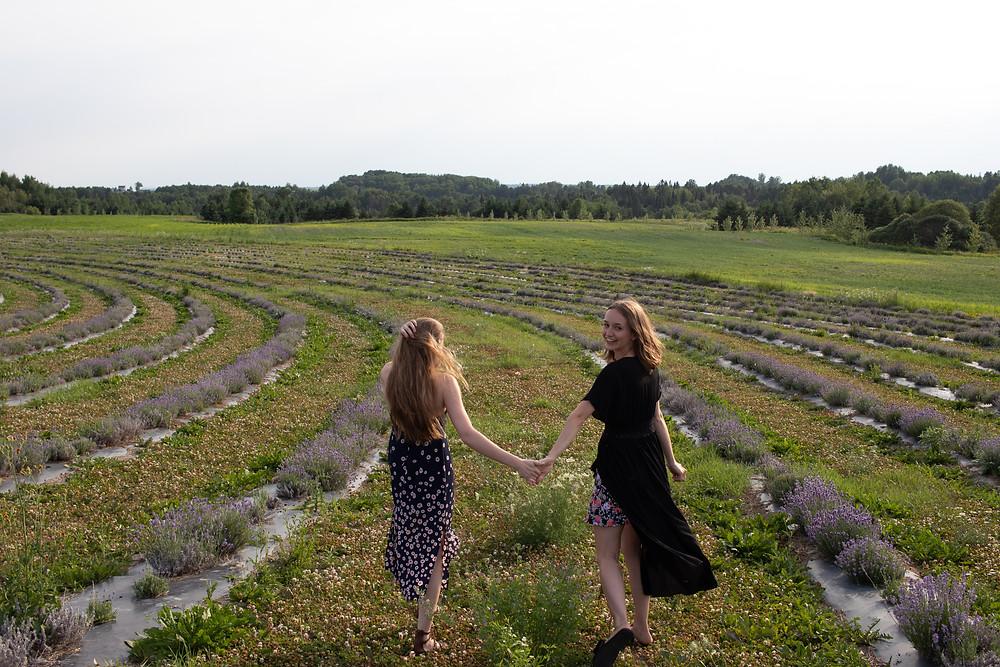 # passionlavande # lavande # tournesols # tournesols # champs # jardinsdetournesols # jardinsdelavande # st-valentin # amour # amitité # famille # idéescadeaux # soiréedefilles # cadeauxstvalentin
