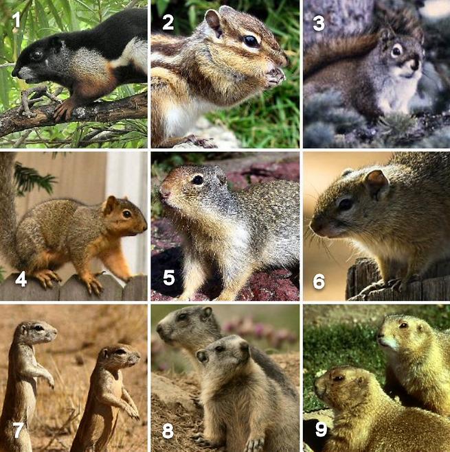 squirrel grid.png