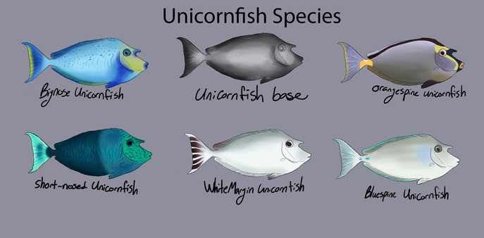 Unicorn fish Reference