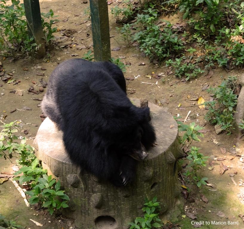 cascade, kuangsi, luang prabang, laos, animal, ours