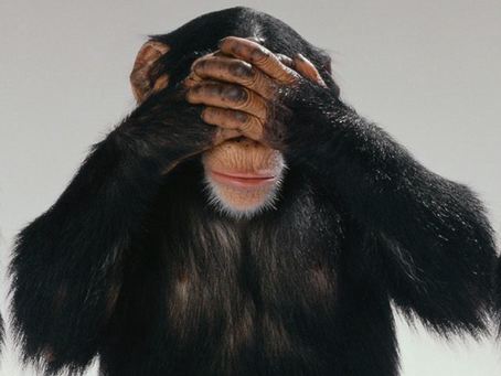 Are Blind Monkeys Better Stock Pickers than Professionals?