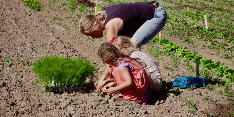 Ingeborg med børnene i marken