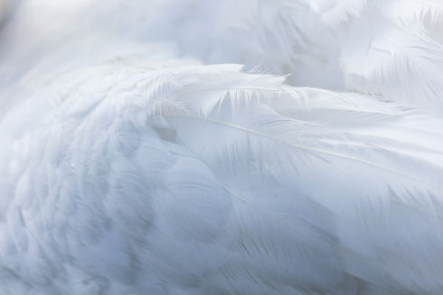 Angel Feather.jpg