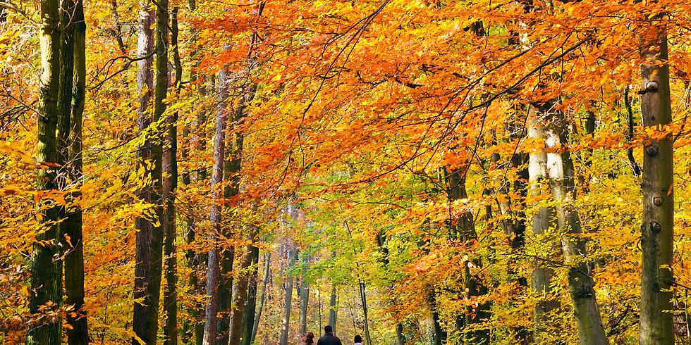 Fall Foliage Frolic