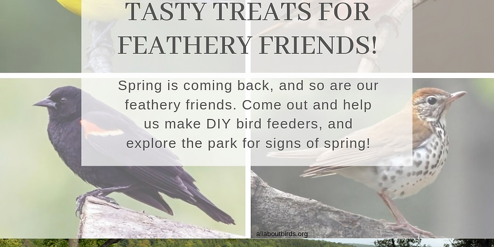 Tasty Treats for Feathery Friends