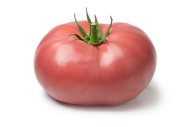Fresh ripe pink beef tomato   isolated o