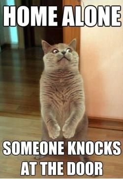 Home-alone-funny-cat-meme[1]