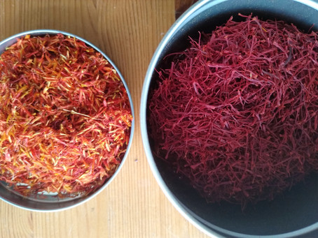 Red Gold: Saffron's Medicinal Potency