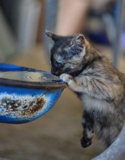 Kitten watering hole