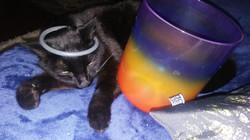 Enzo & Crystal Bowl