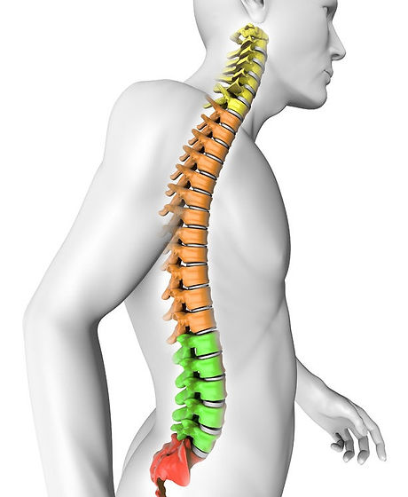 Spine _spilit_by_region29686820_M_0.jpg
