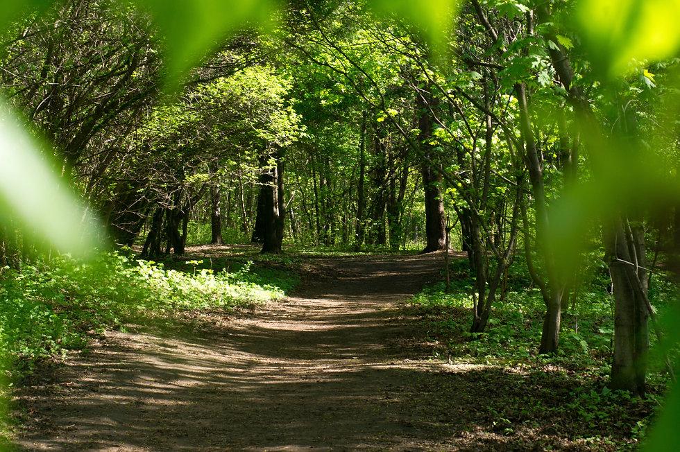 nature-path-1474480.jpg