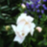 flower intervale.JPG