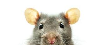 Fe de e-ratas