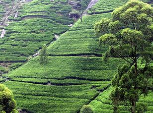 srilanka2.jpg