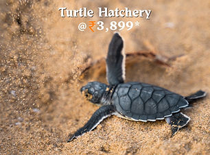Turtle Hatchery.jpg