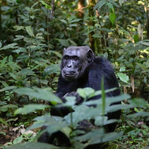 現地の動物園での10日間の動物保護ボランテイア