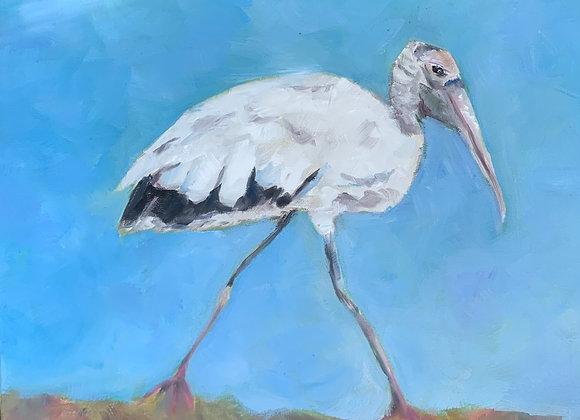 Walking Wood Stork