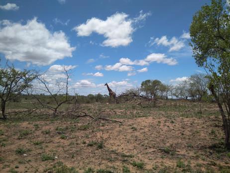 ÁFRICA DO SUL 3º Dia - Mais um dia no Kruger Park! (16/11/2017)