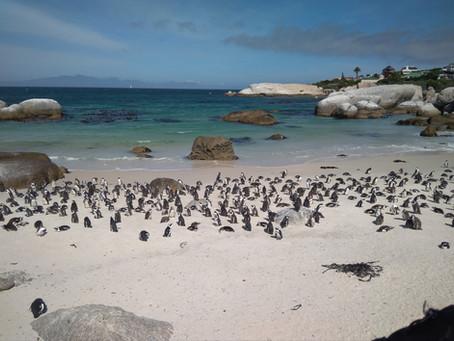 ÁFRICA DO SUL 12º Dia - Visitando o Cabo da Boa Esperança antes da Garden Route (25/11/2017)