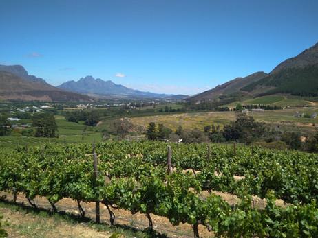ÁFRICA DO SUL 10º Dia - Passeando pela região das vinícolas da África do Sul (23/11/2017)