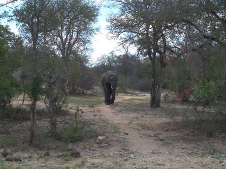 ÁFRICA DO SUL 2º Dia - Kruger Park! (15/11/2017)
