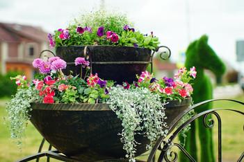 Новая цветочная клумба появилась в Кашире