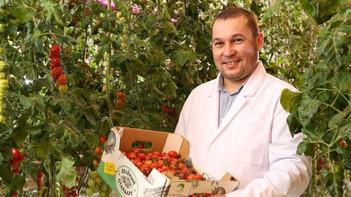 Свыше 18 тыс. тонн овощей собрали в теплицах «Агрокультура Групп»