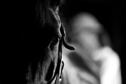 Equine_020.jpg