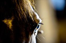 Equine_030.jpg