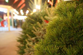 Елочные базары начнут свою работу в Кашире 28 декабря