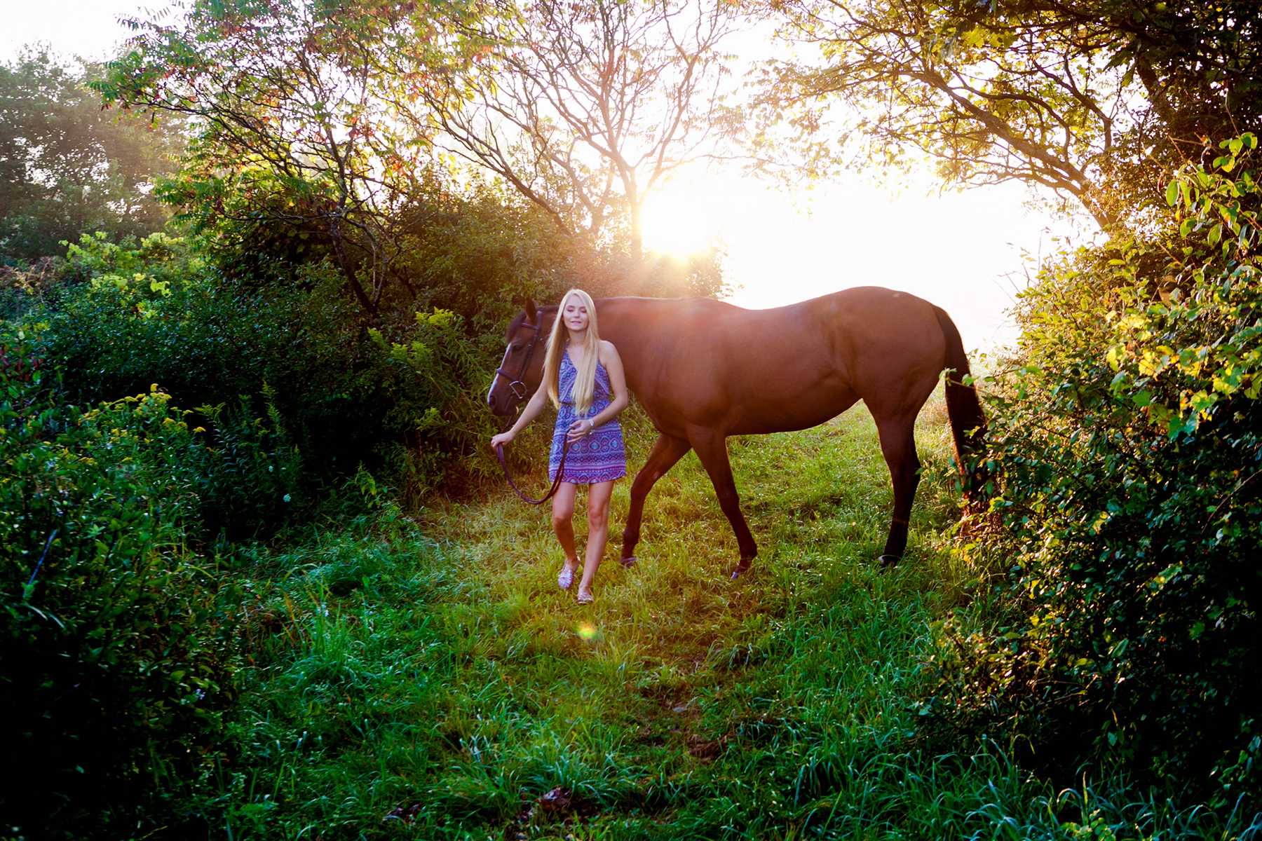 Equine_006.jpg