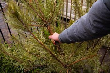 Экологическая акция «Подари своей елке вторую жизнь»