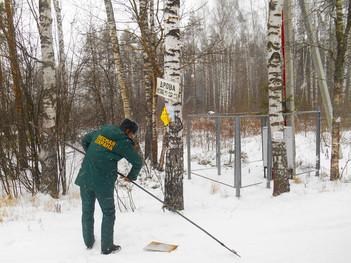 Борьба с незаконной рекламой на деревьях лесничества