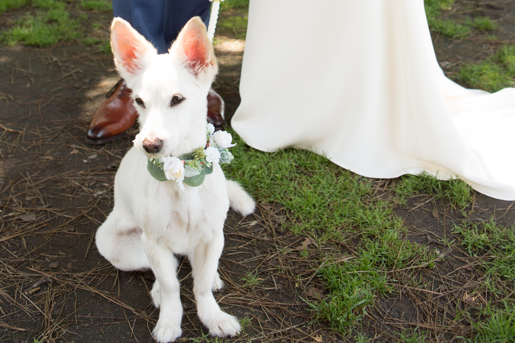 LaJollaWedding_Dog