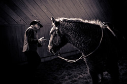Equine_042.jpg