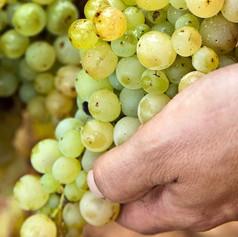 9plus_viticultors-11_edited.jpg