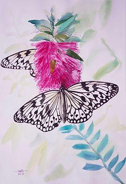 Sokhom - Butterfly.jpg