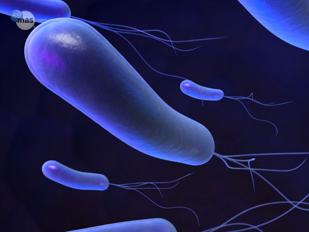 Elimina Helicobacter Pylori