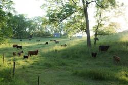 Wisconsin Farm 24x36inch