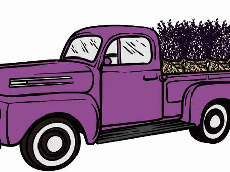 Small Business Spotlight: Mindy Kearney of Purple Thumb Lavender