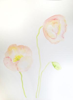 Poppies_Full.jpg