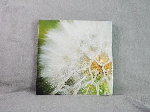 Photo Canvas - Seeds