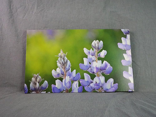 Photo Canvas - Lupines in Line
