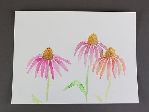 Watercolor Coneflowers