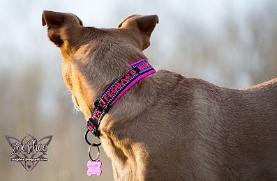http://zoephee.blogspot.com/2016/02/pamper-your-pup-with-hurtta-lifeguard.html hurtta padded collar dog collar