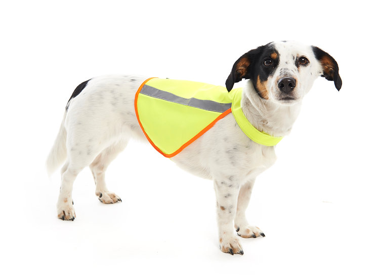 B'Seen Reflective Dog Vest
