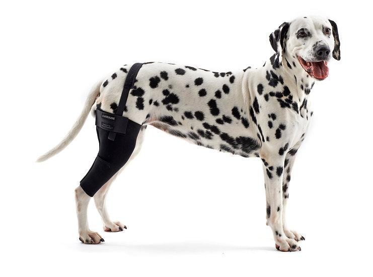 KRUUSE Rehab Knee Protector